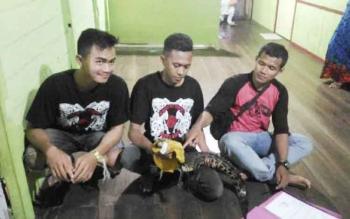 Dua anggota penyayang Reptil dan satu anggota BKSDA SKW II Pangkalan Bun (baju merah) saat penyerahan buaya. BORNEONEWS/KOKO SULISTYO