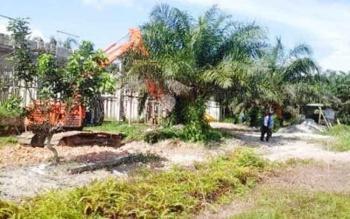 Satu unit eksavator meratakan pohon kelapa sawit di atas lahan restan yang akan dibangun jalur hijau oleh Pemkab Kobar. Namun, beberapa bulan terakhir, jalan ini kembali jadi kebun warga. BORNEONEWS/CECEP HERDI