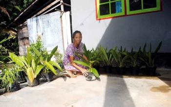 Rosalia sedang merawat anggrek jualannya di kediamannya, Desa Sanggu, Kecamatan Dusun Selatan, Kabupaten Barito Selatan. (BORNEO/URIUTU)