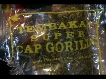 Tembakau Gorila telah Beredar di Kalteng
