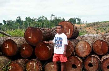 Direktur Save Our Borneo Nordin menunjukan kayu hasil tebangan dari hutan di Kecamatan Antang Kalang, Kabupaten Kotawaringin Timur, Kalimantan Tengah. (BORNEONEWS/DOK SOB/RONI SAHALA)