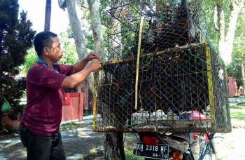 Penjual kelelawar di Kota Palangka Raya. (BORNEO/TESTI PRISCILLA)
