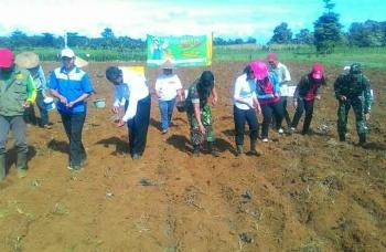 Anggota Koramil 1202-4 Sanggau ikut melakukan penanaman perdana jagung hibriba di Desa Bange, Kalimantan Barat. BORNEONEWS/PENDAM TANJUNGPURA