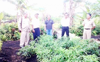 Kabid Produksi Tanaman Hortikultura Dinas Pertanian Kabupaten Kapuas, Ringkesit (ujung kiri) mengunjungi lahan tanaman cabai milik petani. BORNEONEWS/DJIMMY NAPOLEON