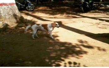 Anjing erkeliaran di pemukiman Wengga. BORNEONEWS/R NAFARIN