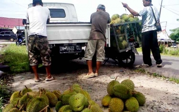 Harga Buah Durian Kasongan Berangsur Turun, Apa Sebab?