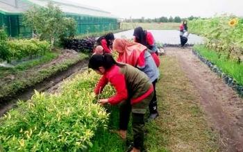 Puluhan siswa yang mengikuti praktek kerja industri di Pusat Pelatihan Pertanian dan Pedesaan Swadaya (P4S) Karya Baru Mandiri, mendapat materi terkait teknik budidaya perkebunan dan hortikultura. BORNEONEWS/KOKO SULISTYO