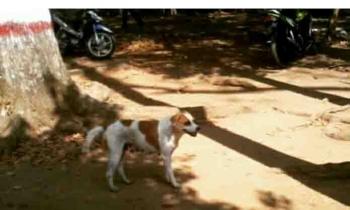 Anjing liar di pemukiman warga. BORNEONEWS/R NAFARIN