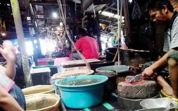 Musim Barat sumberdaya perikanan melimpah ruah, terutama ikan gembung, Saat ini di pasar tradisional ikan kembung dijual dengan harga Rp30 ribu per kilogram, sementara para nelayan di Kobar menjual ke Pengepul Rp22 ribu. BORNEONEWS/CECEP HERDI