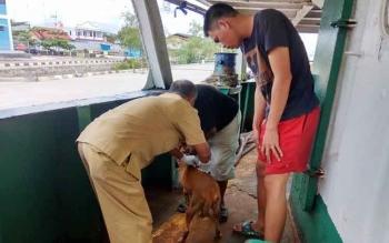 Anggota tim Respon Cepat Penyakit Menular Hewan Disnakkeswan Kobar sedang melakukan penyuntikan seekor anjing di atas KM Tanjung Baru yang berlabuh di pelabuhan Panglima Utar Kumai Kabupaten Kobar. BORNEONEWS/WAHYU KRIDA