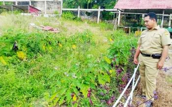 Kepala SMAN 1 Kurun, Batuah memperliahtkan kebun sekolah yang sudah siap untuk dipanen.