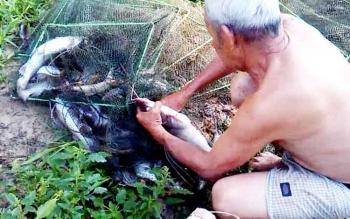 Pensiunan ASN Rahmat, memungut ikan dari pukat di sekitar Danau Kadiwang Buntok, Rabu (1/2/2017)
