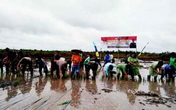 Dandim 1015/SPT Letkol Inf I Gede Putra Yasa bersama Sekda Katingan Nikodemus dan para petani menanam padi di areal program cetak sawah di Kelurahan Pendahara, Kamis (2/2/2017).