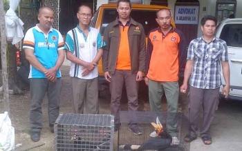 Arlansyah (dua kiri), pemilik burung langka di Kota Buntok, Kabupaten Barito Selatan, bersama Kepala Seksi Wilayah III BKSDA Kalteng Nizar Ardhanianto, Jumat (3/2/2017).
