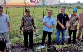 Gubernur Sugianto Sabran saat melakukan panen perdana bawang merah di Kelurahan Banturung, Sabtu (4/2/2017).