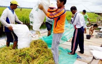 Petani di Desa Sebuai Kecamatan Kumai saat memanen hasil pertanian.