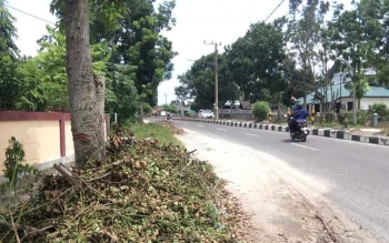 Pengendara sepeda motor melintas di jalan pasanah, Pangkalan Bun, Rabu (8/2/2017). Di bahu jalan ini, banyak sampah ranting dan daun yang menumpuk dan berserakan hasil perampalan petugas PLN.