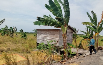 Petani di Kampung Sambas saat berada dilahan pertaniannya.