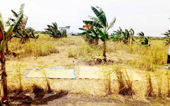 Petani di Kampung Sambas Kelurahan Padang saat menjemur hasil panennya.