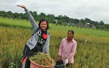 Hasil pertanian padi di Desa Walur hingga Rarawa, Kecamatan Gunung Timang yang melimpah.