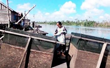 Pengusaha keramba di Sungai Jelai saat memperlihatkan keramba miliknya yang sudah dikosongkan karena banyak ikan yang mati.