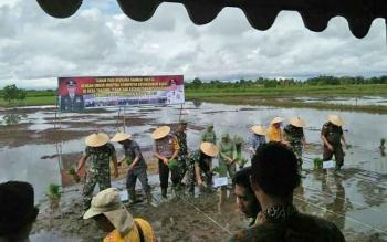 Rombongan Pejabat Bupati Kobar bersama Danrem 102 Panju Panjung dan FKPD Kobar, menanam padi bersama di Desa Tanjung Terantang.