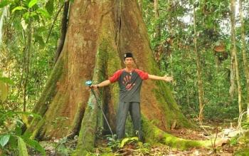 Divisi Informasi dan Komunikasi BOSF Nyaru Menteng, Montheredo Friedman, berfoto dengan latar pohon besar di Bukit Batikap saat pelepasliaran orangutan hasil reintroduksi BOSF Nyaru Menteng.