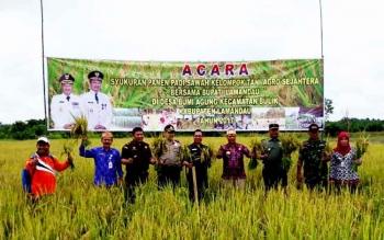 Bupati Lamandau, Ir. Marukan, bersama pejabat FKPD dan SKPD saat syukuran panen perdana di lahan padi milik Poktan Agro Sejahtera, Desa Bumi Agung, Kecamatan Bulik, Kamis (16/2/2017).