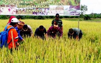 Bupati Lamandau Marukan, bersama sejumlah pejabat FKPD saat syukuran panen perdana di lahan padi milik Poktan Agro Sejahtera, Desa Bumi Agung, Kecamatan Bulik, Kamis (16/2/2017).