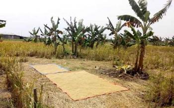 Lahan pertanian di Kampung Sambas Kelurahan Padang Sukamara.