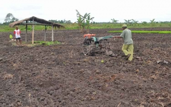 Petani di Desa Pulau Nibung Kecamatan Jelai, Kabupaten Sukamara saat mengeolah lahan.
