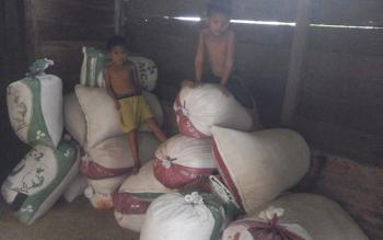 Tumpukan karung berisi padi milik petani di Desa Persil Raya, Kuala Pembuang yang belum laku terjual.