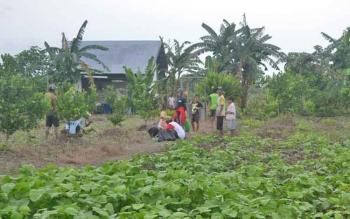 Warga Transmigrasi Desa Pulau Nibung, Kecamatan Jelai, Kabupaten Sukamara.