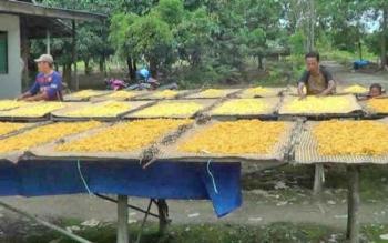 Warga Desa Mantaren II, Kecamatan Kahayan Hilir, Pulang Pisau menjemur pipilan jagung sebelum diolah menjadi makanan