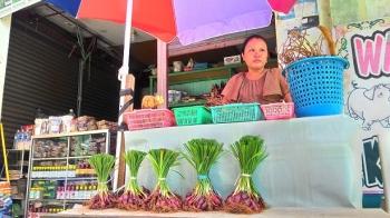Bawang Dayak dikenal sebagai salah satu obat tradisional suku Dayak. Kini sudah banyak yang menjualnya, terutama di Pasar Kahayan, Palangka Raya.