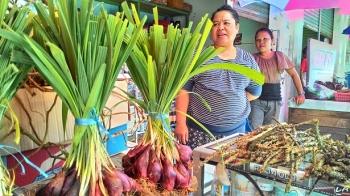 Bawang Dayak merupakan obat tradisional Dayak yang juga memiliki pantangan setiap kali Anda mengonsumsinya. Indu Ani, salah seorang Penjual ramuan obat tradisional khas Dayak menjelaskan pantangannya