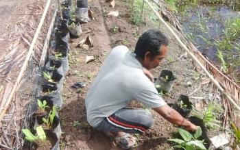 Anang, petani padi di Desa Pematang Limau, menyempatkan waktunya untuk merawat pertumbuhan cabai di depan rumahnya.