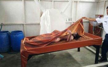 Jesad Julia saat disemayamkan di ruanh jenazah, Rabu (22/2/2017)
