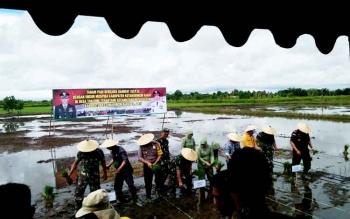 Komandan Resort Militer Panju Panjung bersama FKPD Kobar tanam padi bersama di Desa Tanjung Trantang.