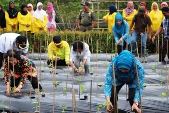 Gerakan menanam cabai dilaksanakan di Desa Kanamit Jaya, Kecamatan Maliku, Kabupaten Pulang Pisau, Minggu (26/2/2017).