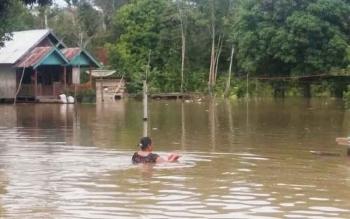 Seoranh perempuan nekad menerang banjir yang merendam pemukiman warga di Kelurahan Pangkut RT 1 Kecamatan Aruta baru-baru ini. Camat Aruta, Marwoto menyebut banjir diperparah akibat perubahan kawasan serta penggundulan hutan.