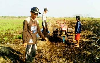Sejumlah petani di Desa Teluk Pulai mulai menggarap lahan pertanian tanpa bakar.