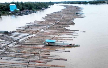 Rakitan berisi kayu log (bulat) diameyer sekitar 50 cm sepanjang kurang lebih satu kilo tampak milir di Sungai Katingan melewati bawah Jembatan Kasongan, Rabu (1/3/2017).