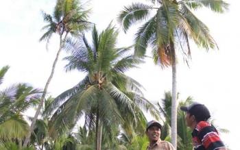 Areal perkebunan kelapa di Desa Samuda Kecil, Kecamatan Mentaya Hilir Selatan, Kotim.