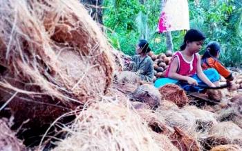Proses pembersihan serabut kelapa.