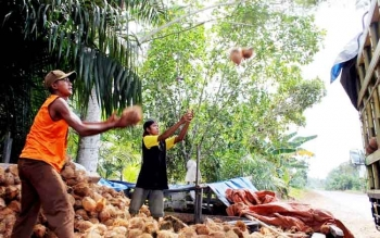 Ini Harapan Petani Terkait Rencana Pabrik Tepung Kelapa