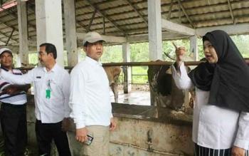 Walikota Palangka Raya, Riban Satia saat melakukan kunjungan kerja ke sentra peternakan sapi di salah satu daerah kunjungannya.