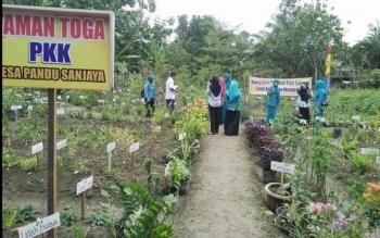 Rombongan PKK Kabupaten Kobar saat menilai salah satu tanaman toga di Pandu Sanjaya yang dikelola ibu-ibu PKK desa Pandu Sanjaya baru-baru ini.