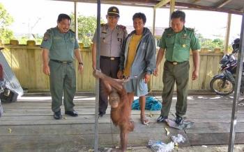 (Dari kiri) Polhut di BKSDA Kalteng, Aliansyah, Kapolsek Kapuas Tengah Iptu John Digul Manra, warga yang menyerahkan Orangutan, Depot dan Wakil Danramil 10/KPS-TGH, Pelda Hermanto bersama Orangutan jantan.