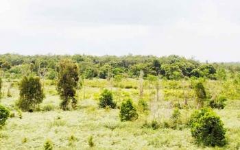 Hutan dan lahan milik pemerintah daerah di Pulang Pisau